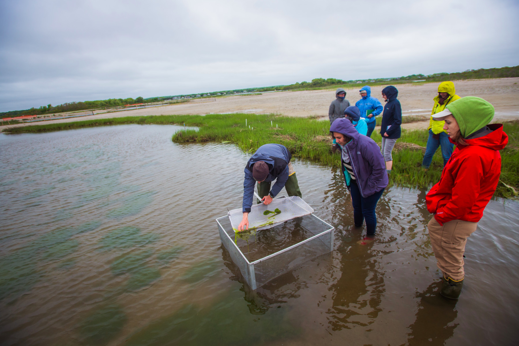 Assessing wetland biodiversity in a restored salt marsh